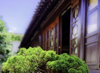 Wyjątkowe piękno - bonsai