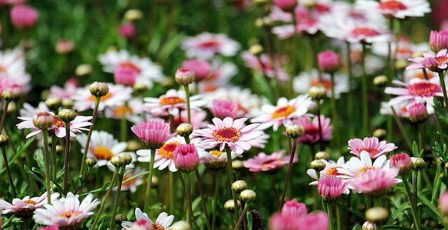 Naturalny ekosystem w przydomowym ogrodzie