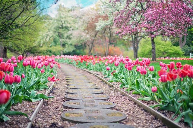Sztuczne, czy naturalne nawozy do ogrodu