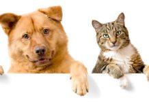 Karmy purina dla psów i kotów